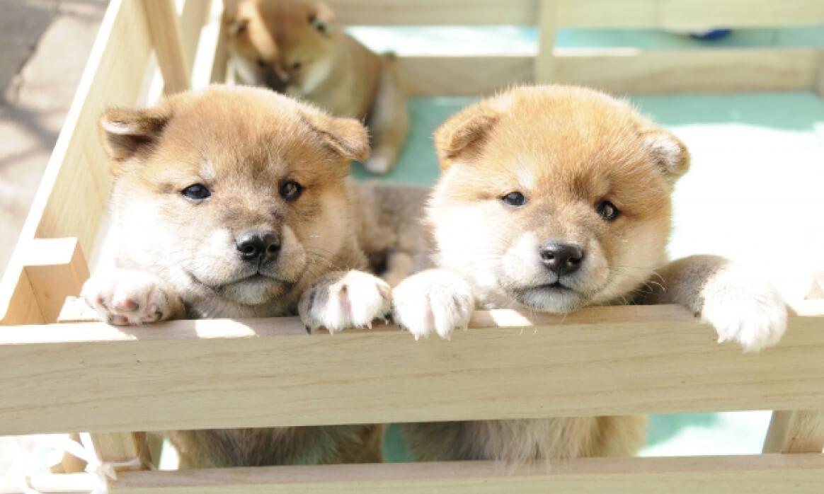 廣瀬造園の、愛犬とともに過ごす庭づくりをご紹介